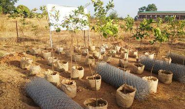 Directaid مشاريع التنمية Green Yard Project 4