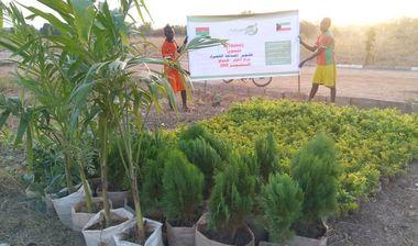 Directaid مشاريع التنمية Green Yard Project 5