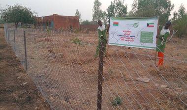 Directaid مشاريع التنمية Green Yard Project 6