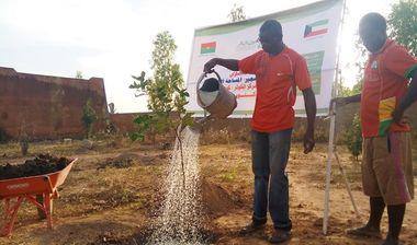 Directaid مشاريع التنمية Green Yard Project 8