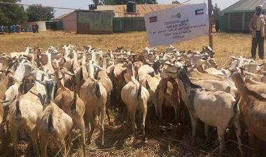Directaid مشاريع التنمية Al-Sanabel Project - Goat Production-7 1