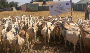 Directaid development Al-Sanabel Project - Goat Production-7 1
