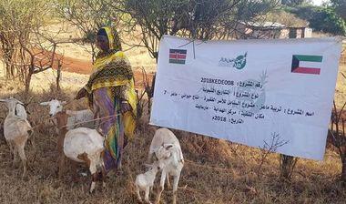 Directaid development Al-Sanabel Project - Goat Production-7 10