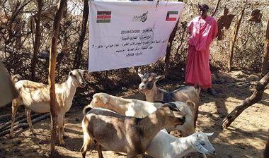 Directaid development Al-Sanabel Project - Goat Production-7 15