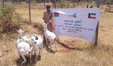 Directaid مشاريع التنمية Al-Sanabel Project - Goat Production-7 2