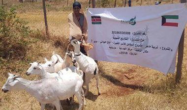 Directaid development Al-Sanabel Project - Goat Production-7 3