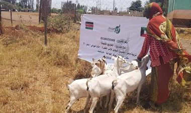 Directaid مشاريع التنمية Al-Sanabel Project - Goat Production-7 4