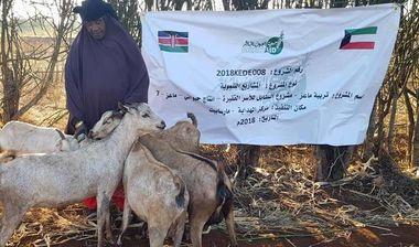 Directaid development Al-Sanabel Project - Goat Production-7 6