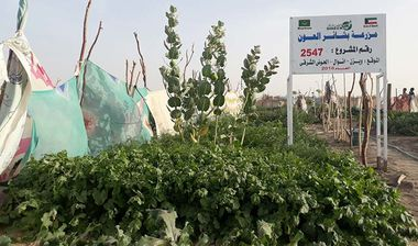 Directaid development Bashayir Al-Oeawn Farm 1