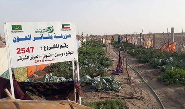 Directaid مشاريع التنمية Bashayir Al-Oeawn Farm 9