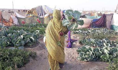 Directaid development Bashayir Al-Oeawn Farm 5