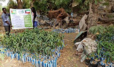 Directaid مشاريع التنمية Green Yard Project -2nd 20