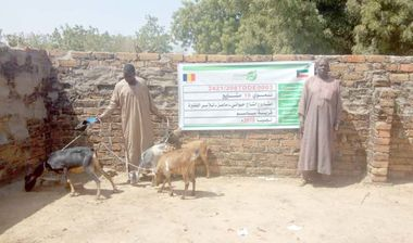 Directaid مشاريع التنمية Project Animal-Goat-for Poor Family-2 6