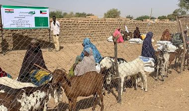 Directaid مشاريع التنمية Al-Maawn Project - Raising Goats - 2 4