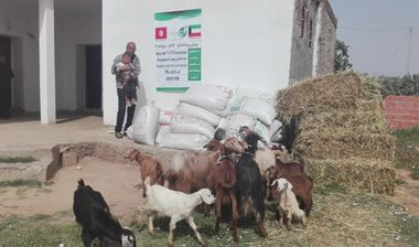 Directaid مشاريع التنمية Al-Sanabel Project - Goat Production-8 2