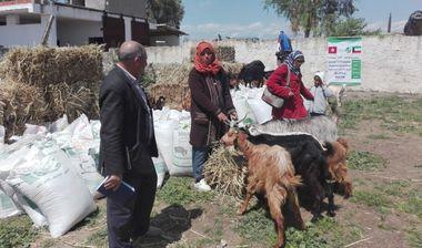 Directaid development Al-Sanabel Project - Goat Production-8 4