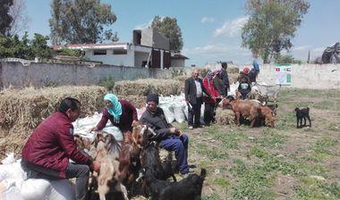 Directaid development Al-Sanabel Project - Goat Production-8 5