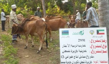 Directaid مشاريع التنمية Al-Sanabel Project Cow Production-13 2