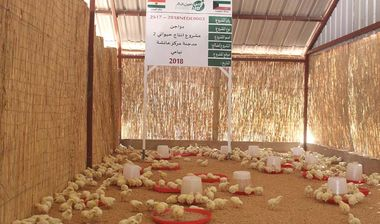 Directaid مشاريع التنمية Animal Production - Poultry -2 1