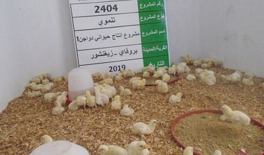 Directaid مشاريع التنمية Animal Production - Poultry - Senegal - 1 1