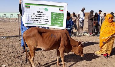 Directaid  project animal production cows-12 1