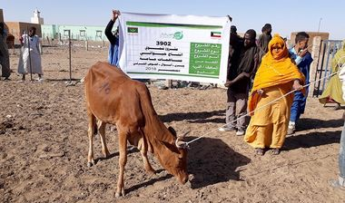 Directaid development project animal production cows-12 1