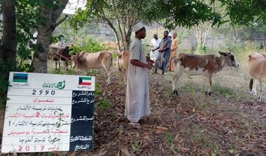 Directaid مشاريع التنمية Sudair Project - Raising Cows - 1 1