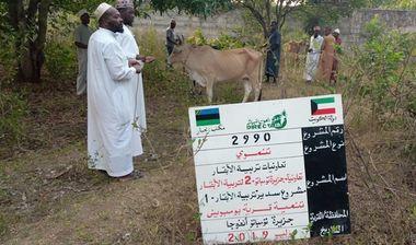 Directaid development Sudair Project - Raising Cows - 1 1