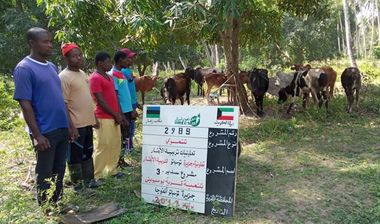 Directaid مشاريع التنمية Sudair Project - Raising Cows - 3 2