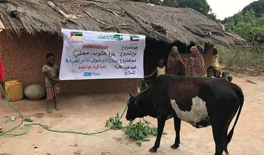 Directaid development project animal production cows-15 1