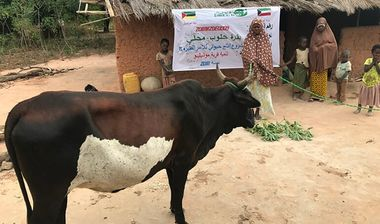 Directaid development project animal production cows-15 2