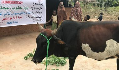 Directaid development project animal production cows-15 3