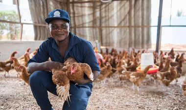 Directaid مشاريع التنمية AlSonbolat Poultry Rearing 1