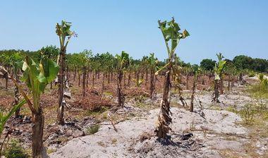 Directaid development Al-Amal Center Afforestation 10