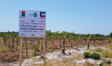 Directaid مشاريع التنمية Al-Amal Center Afforestation 1