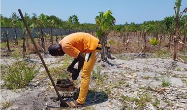 Directaid development Al-Amal Center Afforestation 1