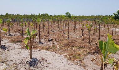 Directaid development Al-Amal Center Afforestation 3