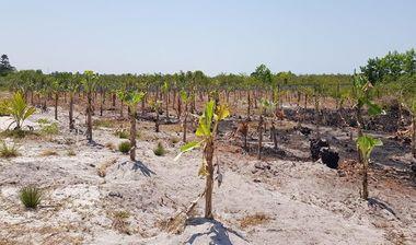 Directaid development Al-Amal Center Afforestation 4