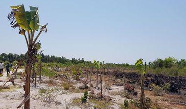 Directaid development Al-Amal Center Afforestation 5