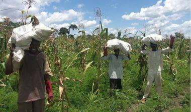 Directaid مشاريع التنمية Al-Aneam Orphans Farm -3 1
