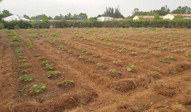 Directaid مشاريع التنمية Al-Naeim Farm 3