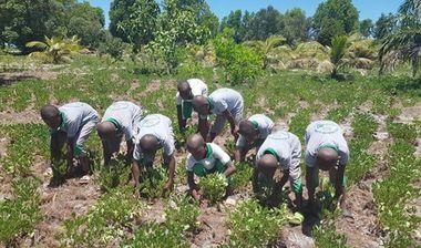 Directaid مشاريع التنمية Al-Naeim Farm 4