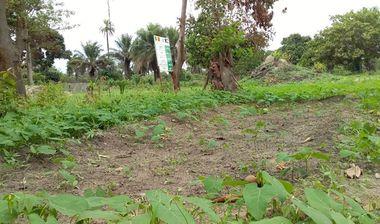 Directaid مشاريع التنمية Almjd Al-Khadra' Farm 10
