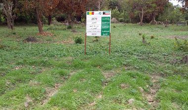 Directaid مشاريع التنمية Almjd Al-Khadra' Farm 11