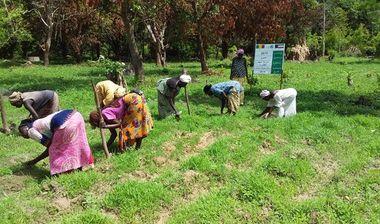 Directaid مشاريع التنمية Almjd Al-Khadra' Farm 3
