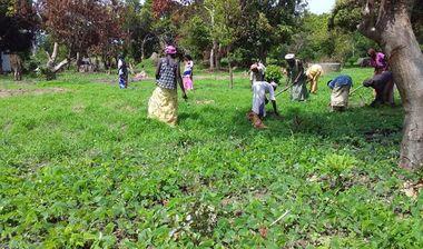 Directaid مشاريع التنمية Almjd Al-Khadra' Farm 5