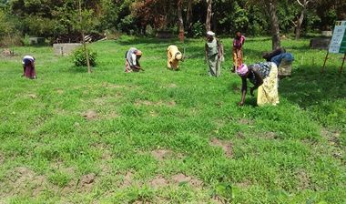Directaid مشاريع التنمية Almjd Al-Khadra' Farm 6