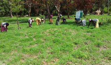 Directaid مشاريع التنمية Almjd Al-Khadra' Farm 8