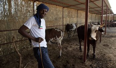 Directaid مشاريع التنمية Kenya Farm for Raising Cows 1