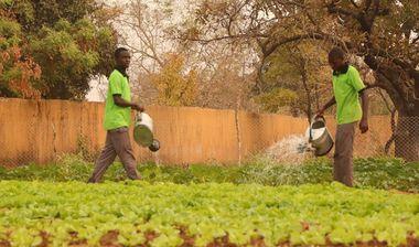 Directaid مشاريع التنمية Al Anaam Farm -13 1